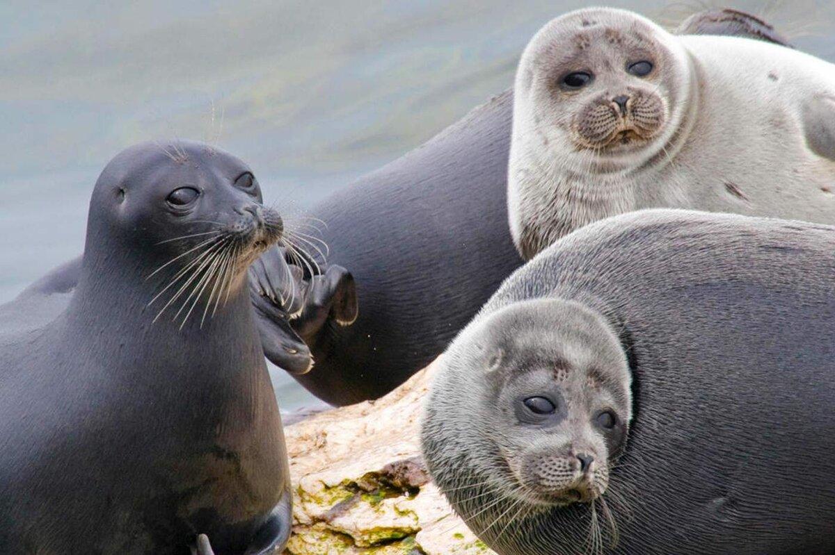 Животные на байкале фото