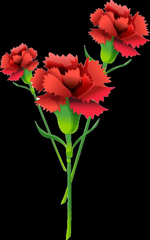 картинки цветы на белом фоне анимации 23 февраля горем