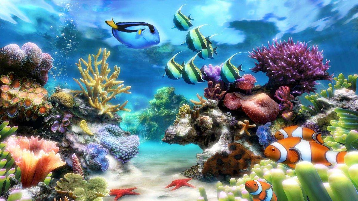 Именами, картинки анимации рыбок на рабочий стол