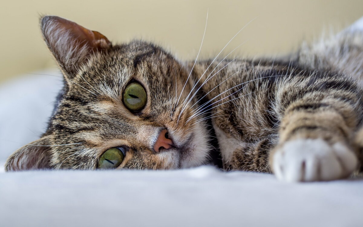 Горка картинки, можно картинки кошки