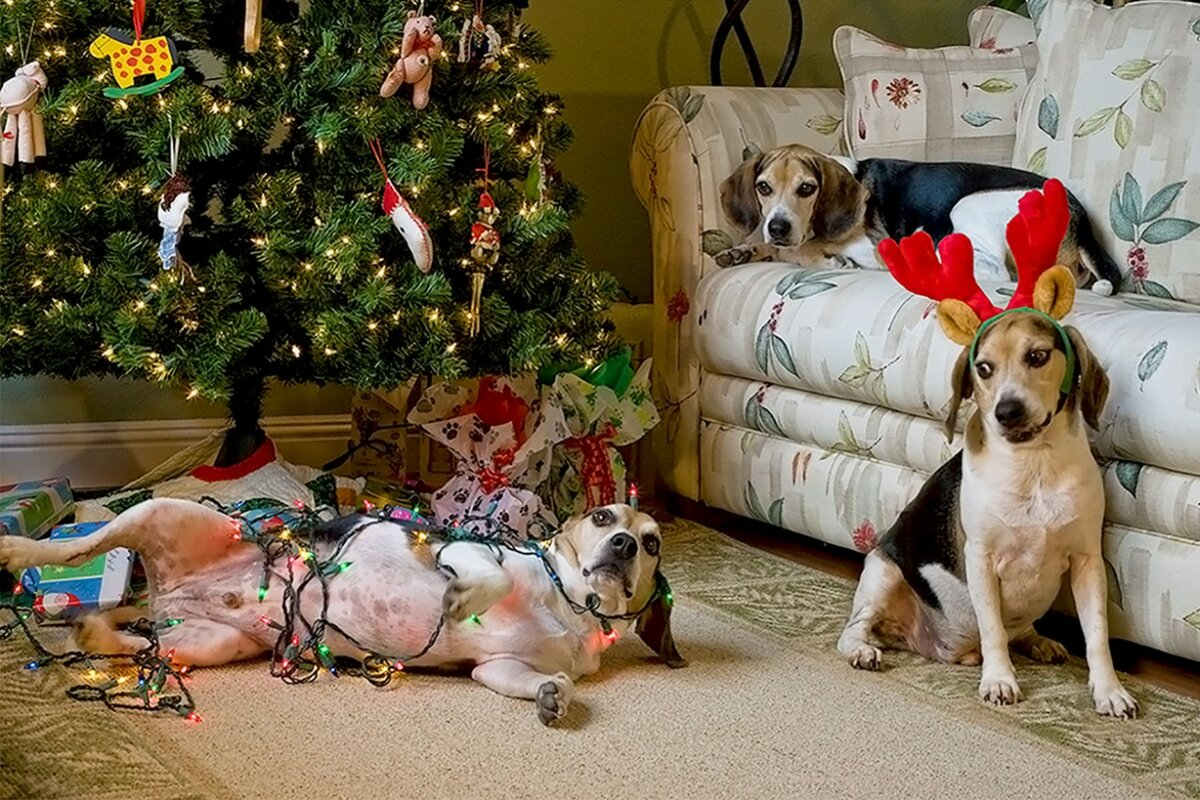 интересуются смешные новогодние фотографии животных параметры колесных