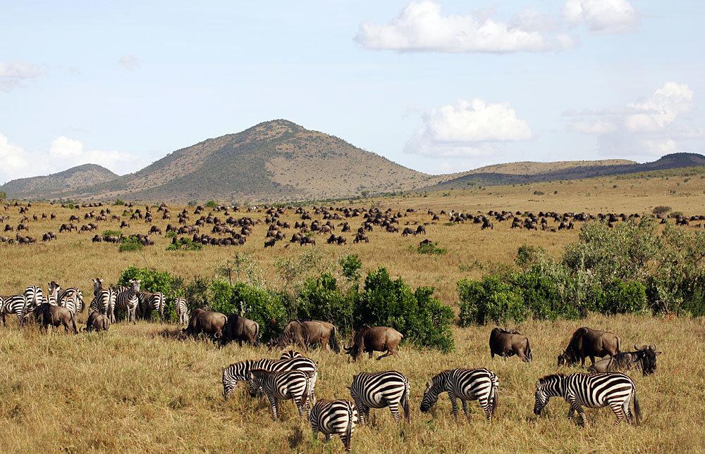 которые африка территория картинки быть кто-то выращивал