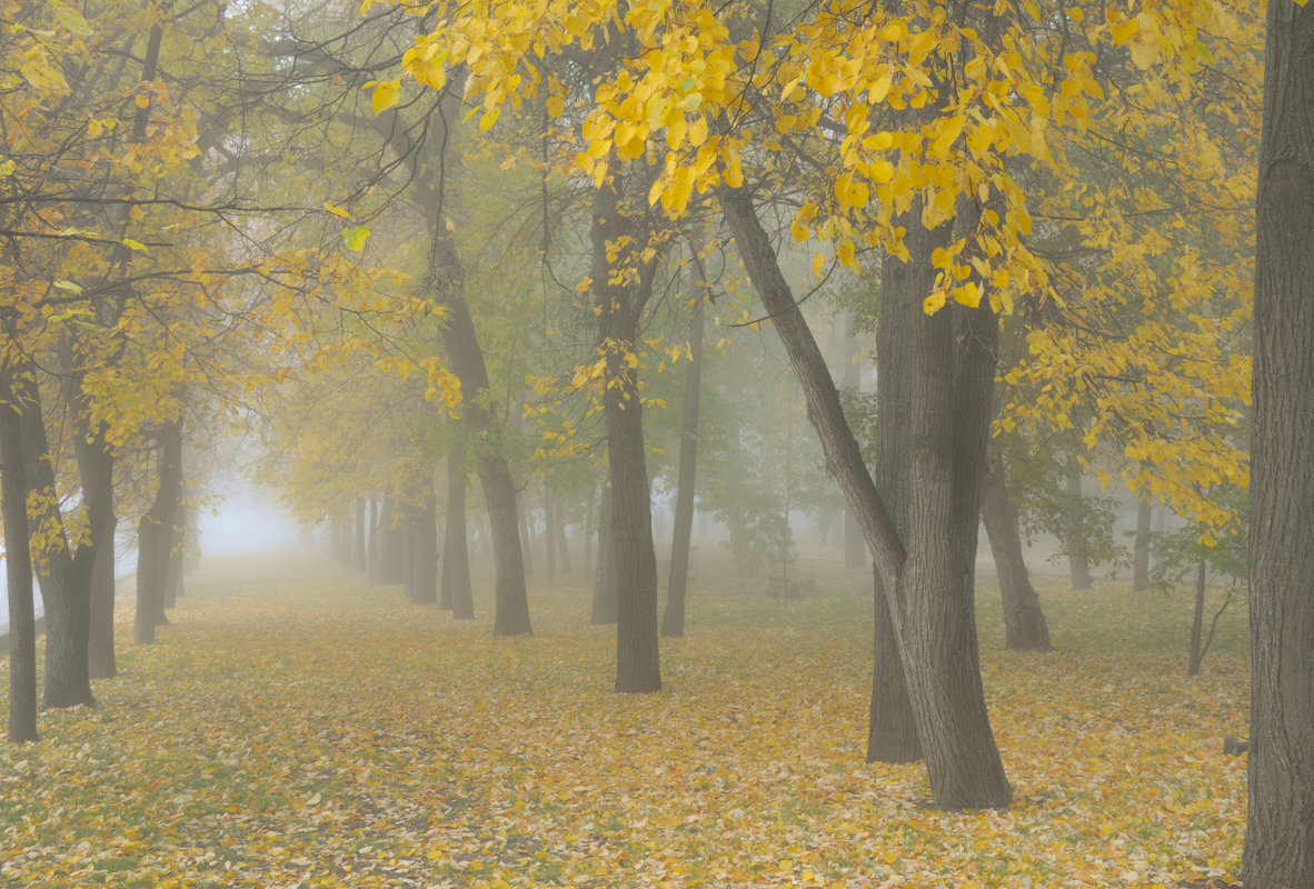 Туманы бывают в любое время года, но чаще всего они случаются в конце лета или осенью, когда оÑлаждение воздуÑа происÑодит быстрее, чем остывает земля.