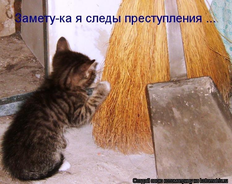 Прикольные картинки прикольные про кошек с надписями до слез