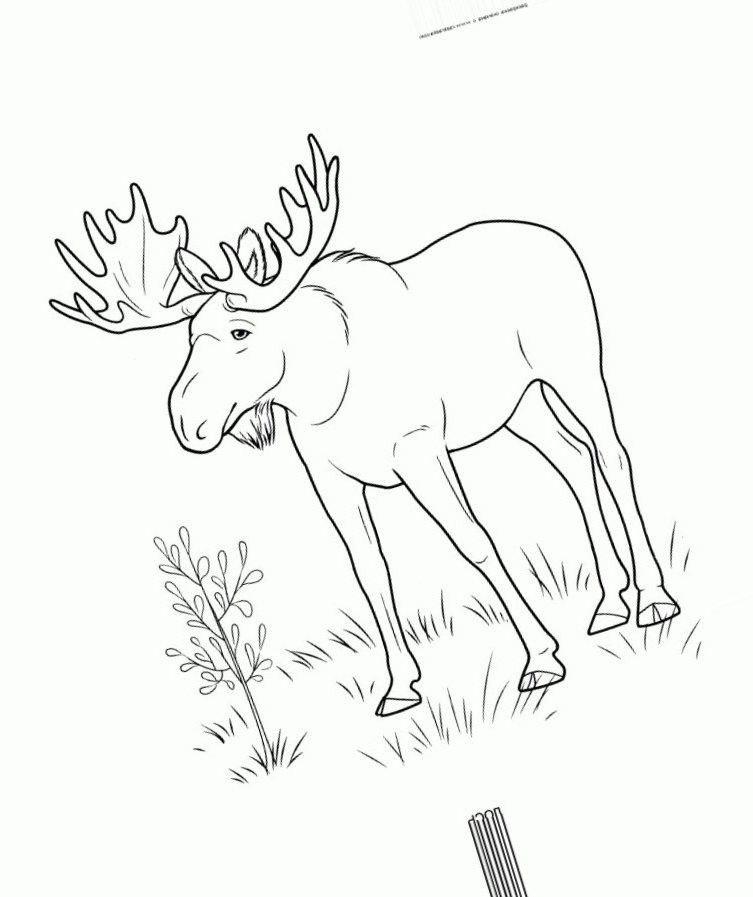 Картинки раскраски дикие животные зимой