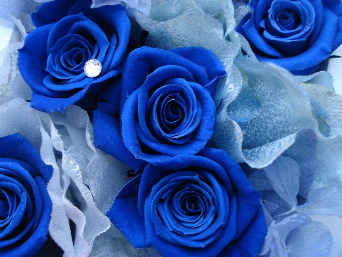 Надписями имен, картинки букет синих роз