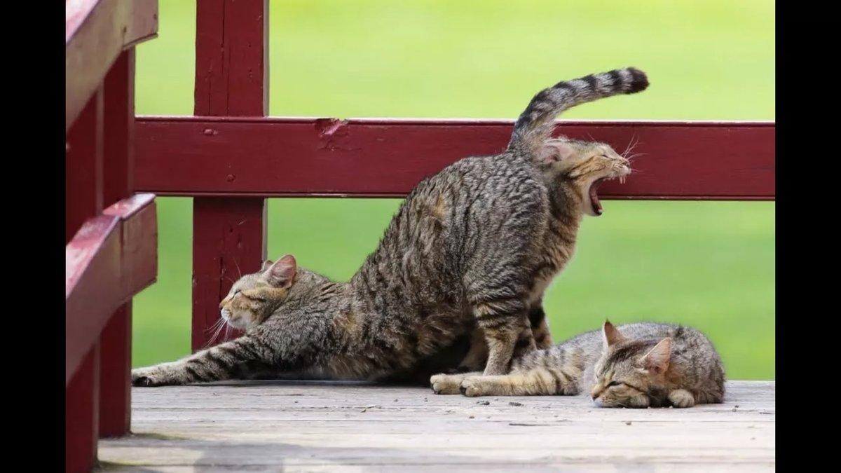 Приколы картинки кошки, девушке день