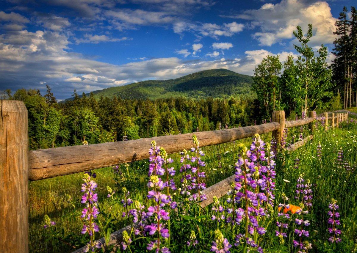 Добрым, природа весна картинки
