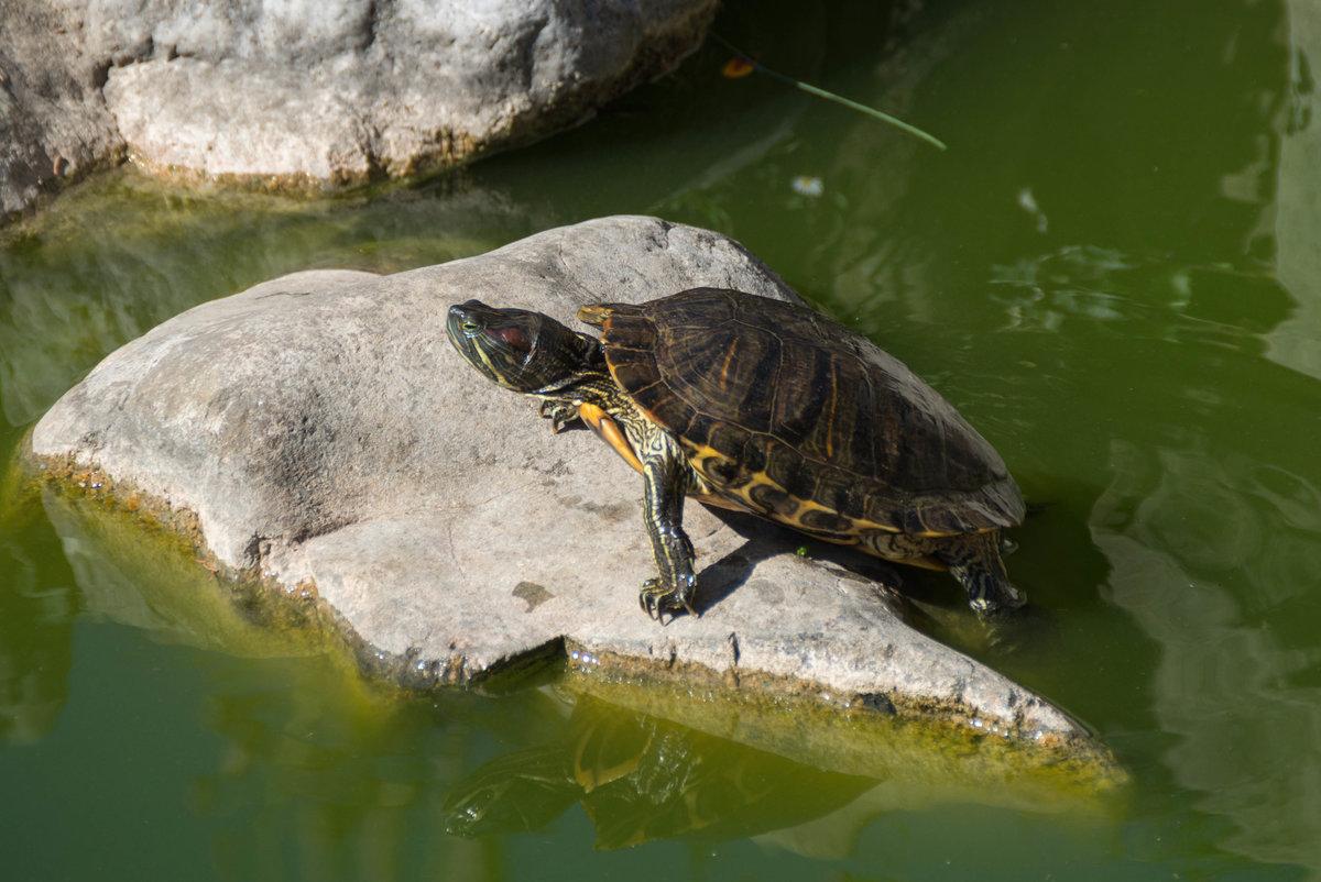 В парке Монтедор #никита #республикакрым #октябрь2018 #нфд #паркмонтедор #черепаха