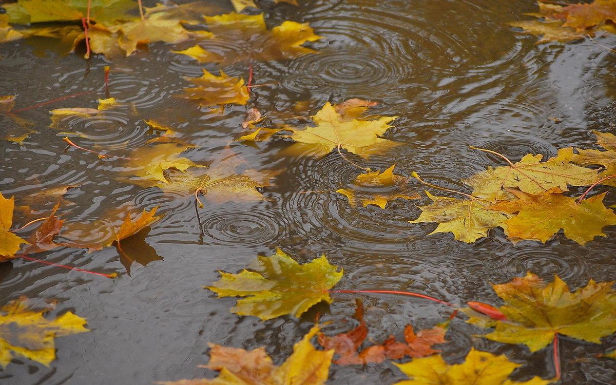 Картинки дождливая осень