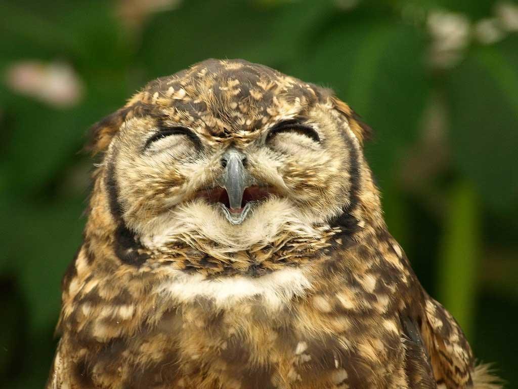 Смешная картинка сова, отличного дня картинки