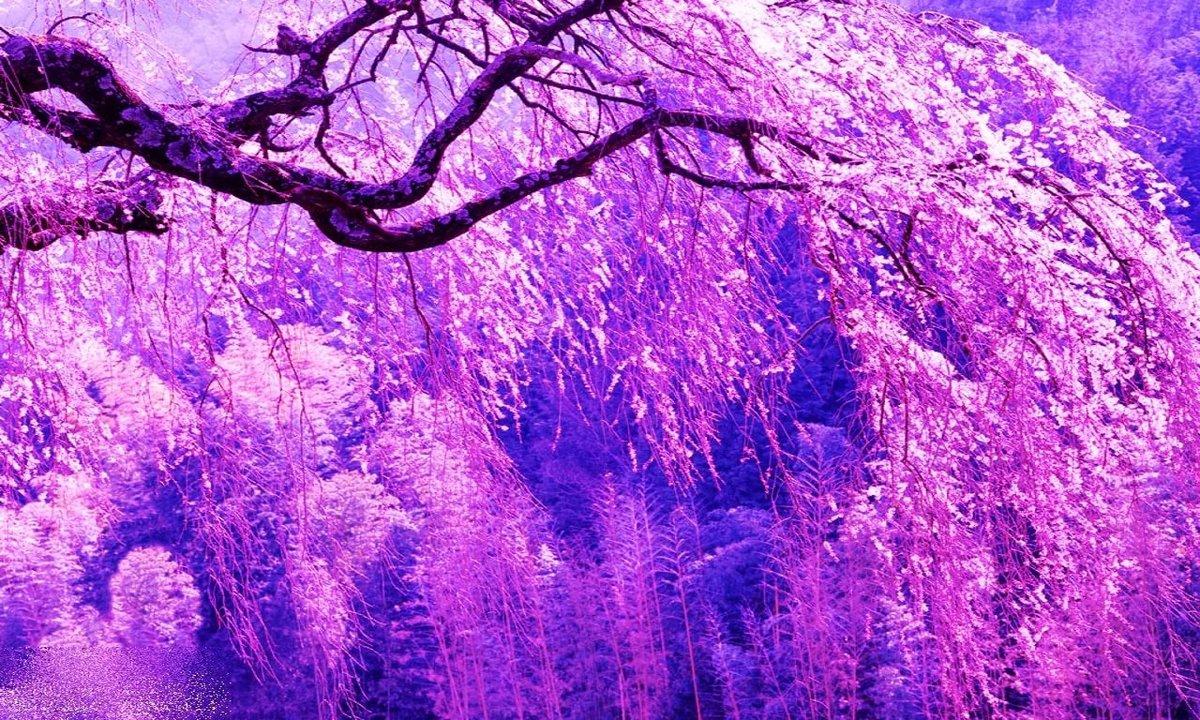 Красивый фиолетовые картинки