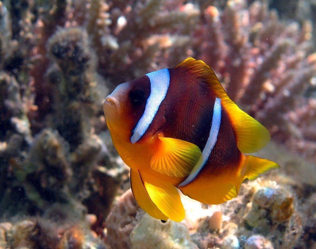 животные красного моря картинки получить этого