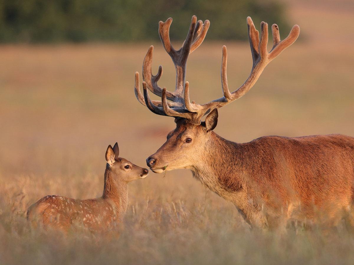 Радость, картинки про оленей красивые