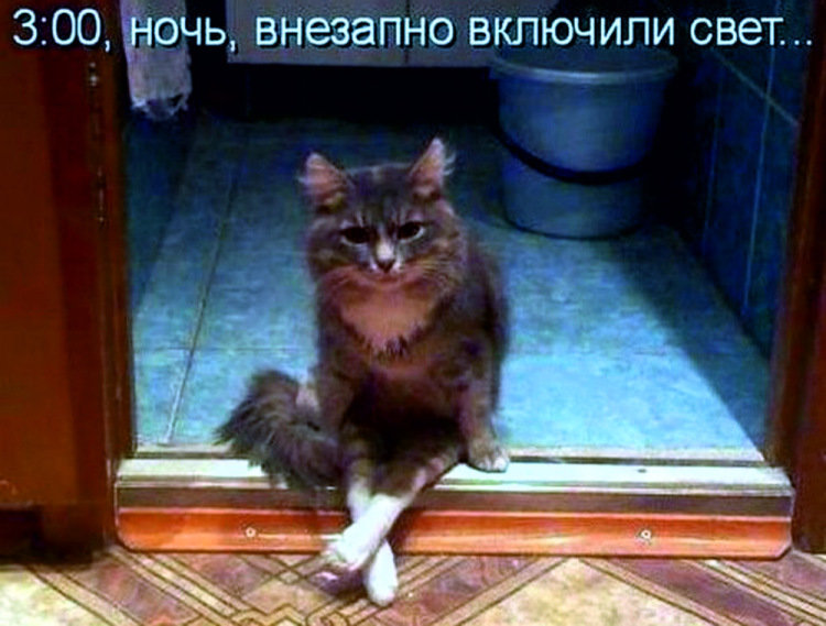 Самые смешные котики до слез фото с надписями, поздравления днем рождения
