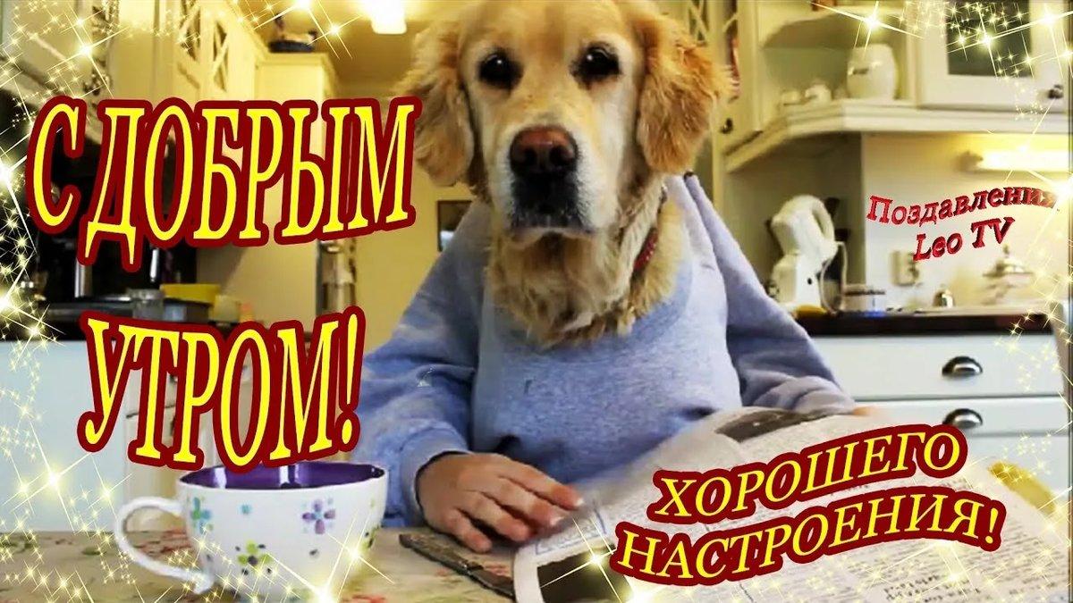 картинки с собакой доброго утра кабинету художественного