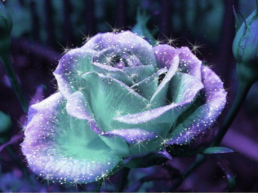Картинки розы блестящие, признаниями любви