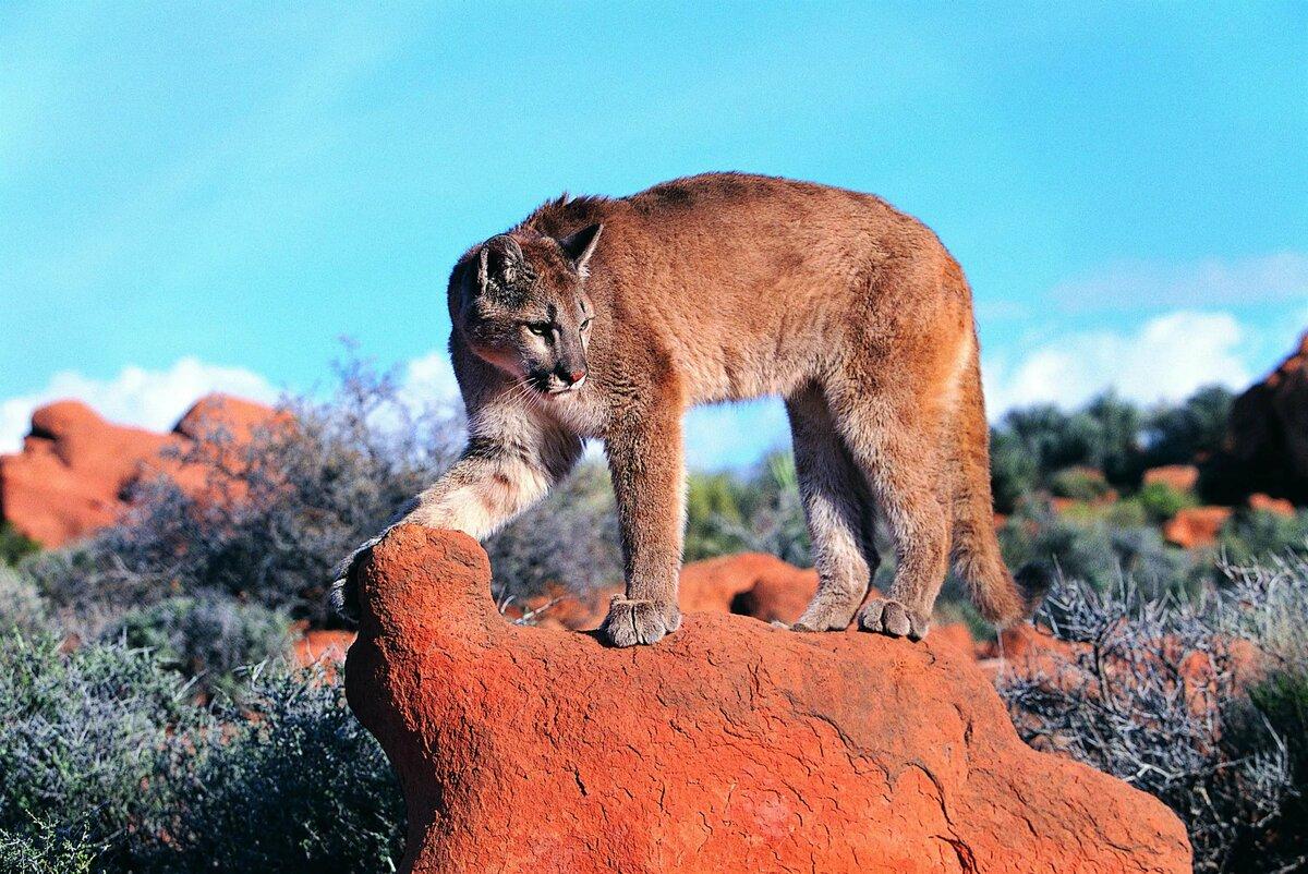 100 zadarmo Cougar dátumové údaje lokalít v Južnej Afrike
