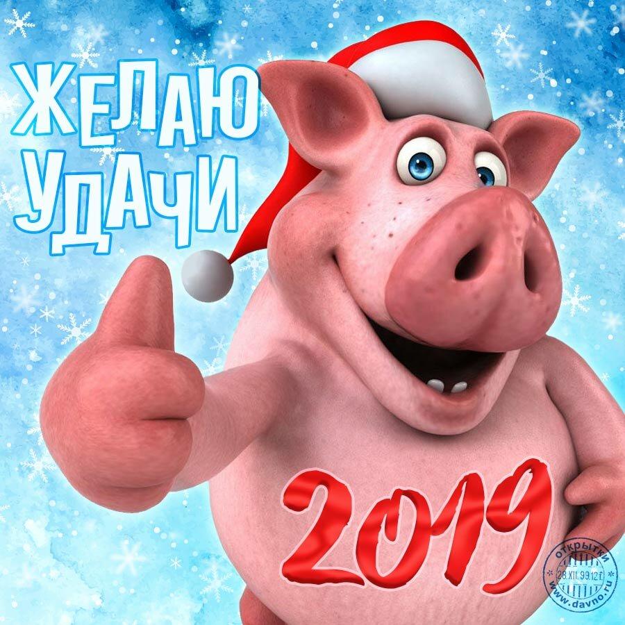 Новогодние прикольные открытки с годом свиньи, рождения