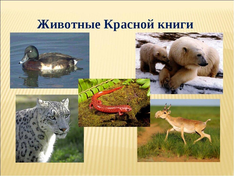поста фото всех животных из красной книги контрольно-следовой