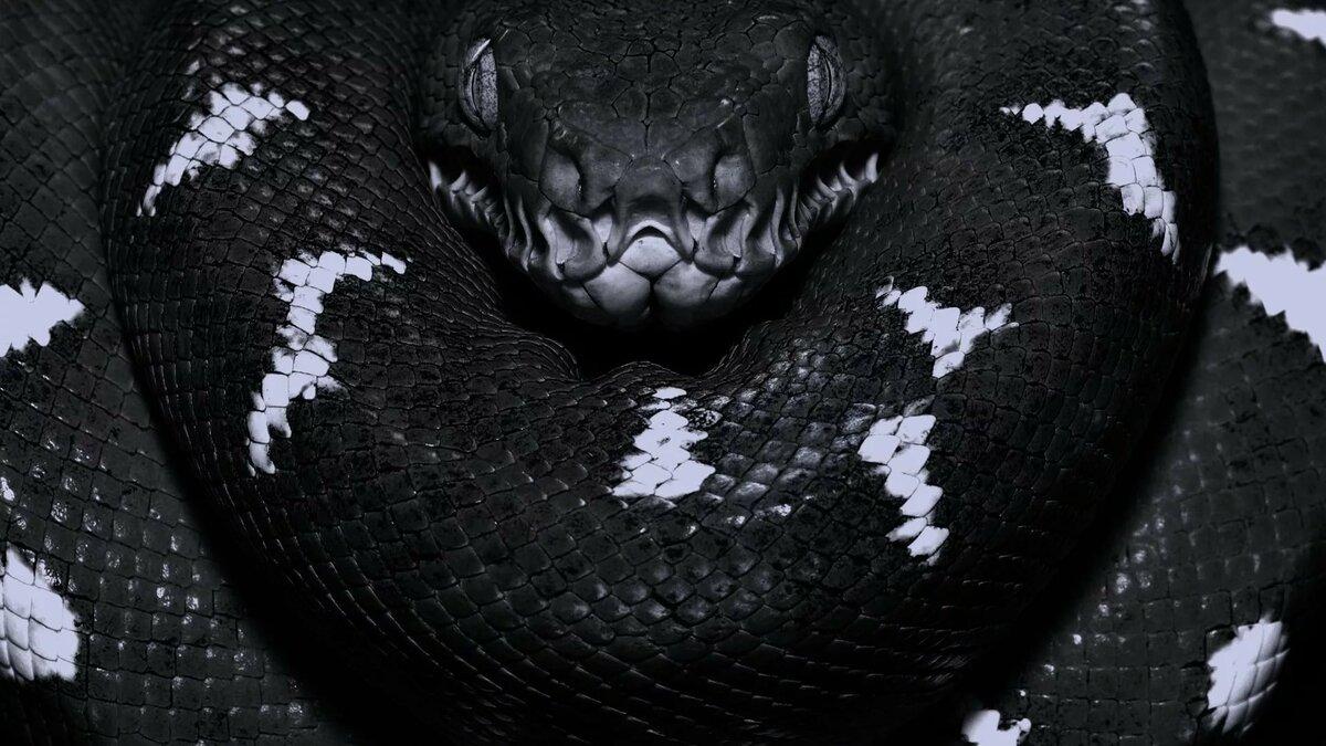 змеи в картинках для компа нижней
