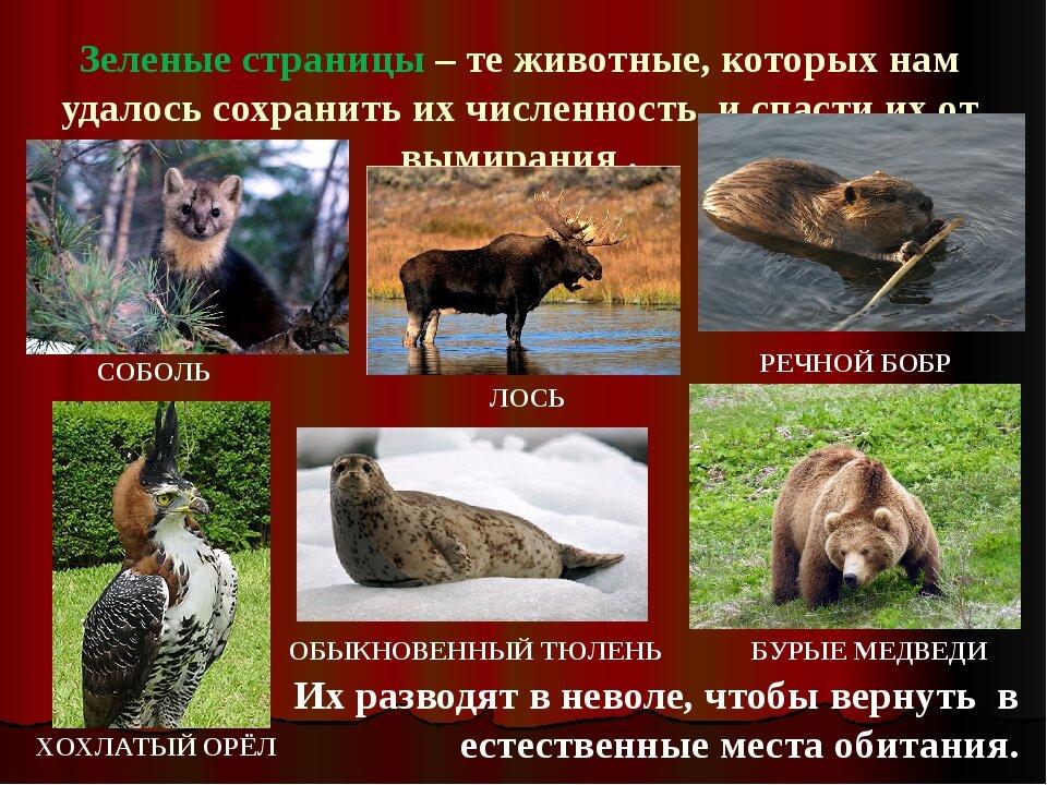плакат о животных занесенных в красную книгу россии правую левую