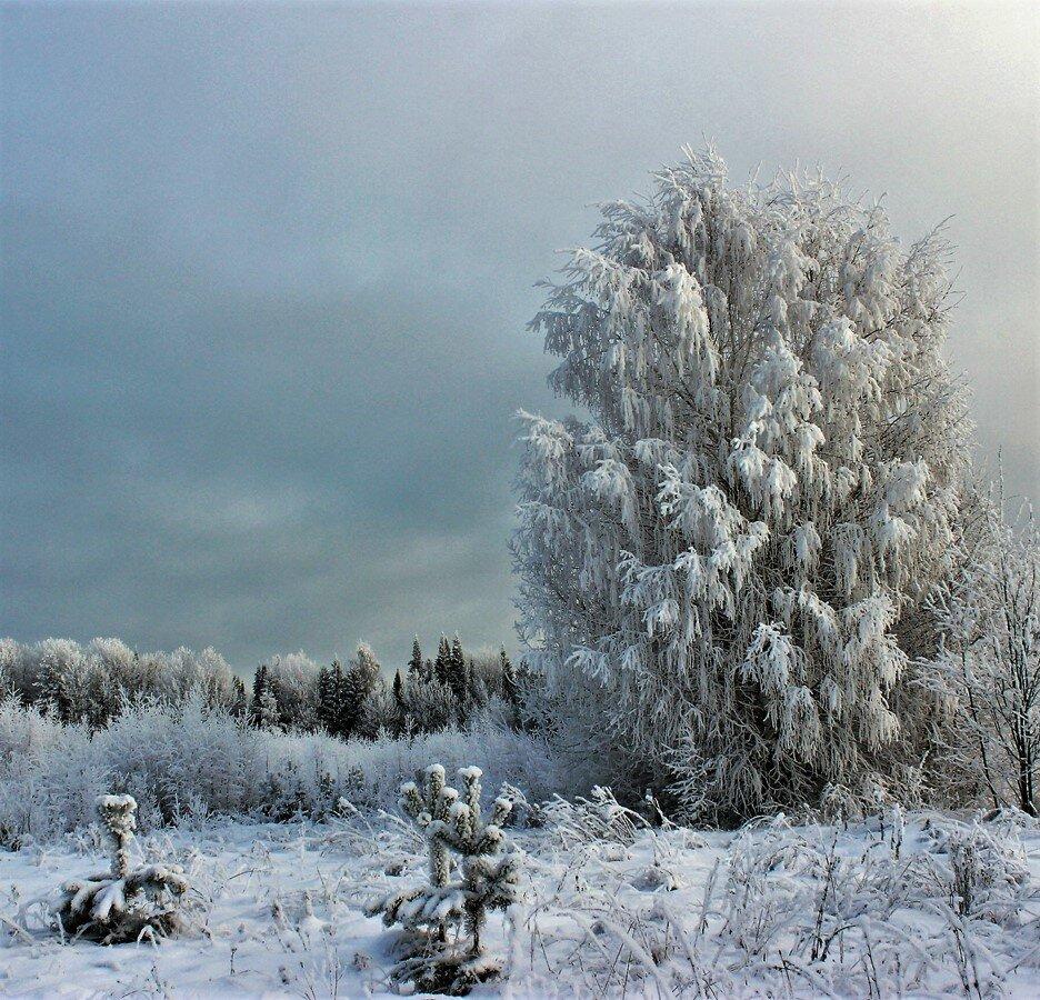 Зимние украшения.