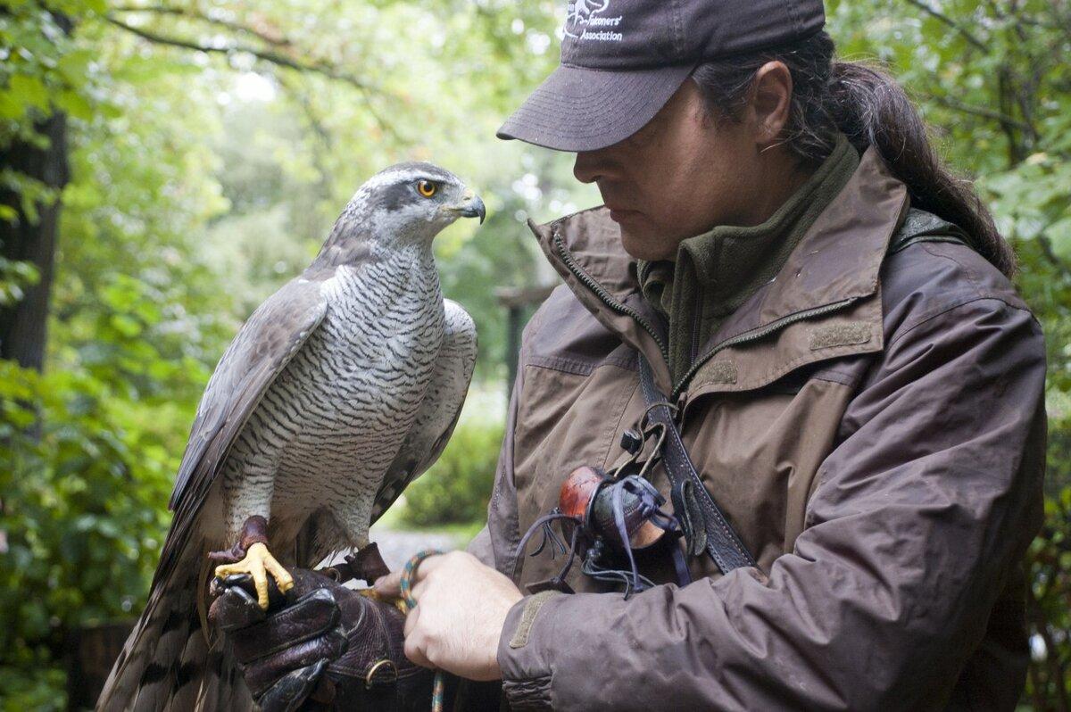 была фото птицы и человек картинки возможности стоит убрать