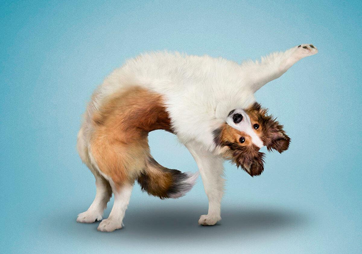 Картинки смешных поз животных