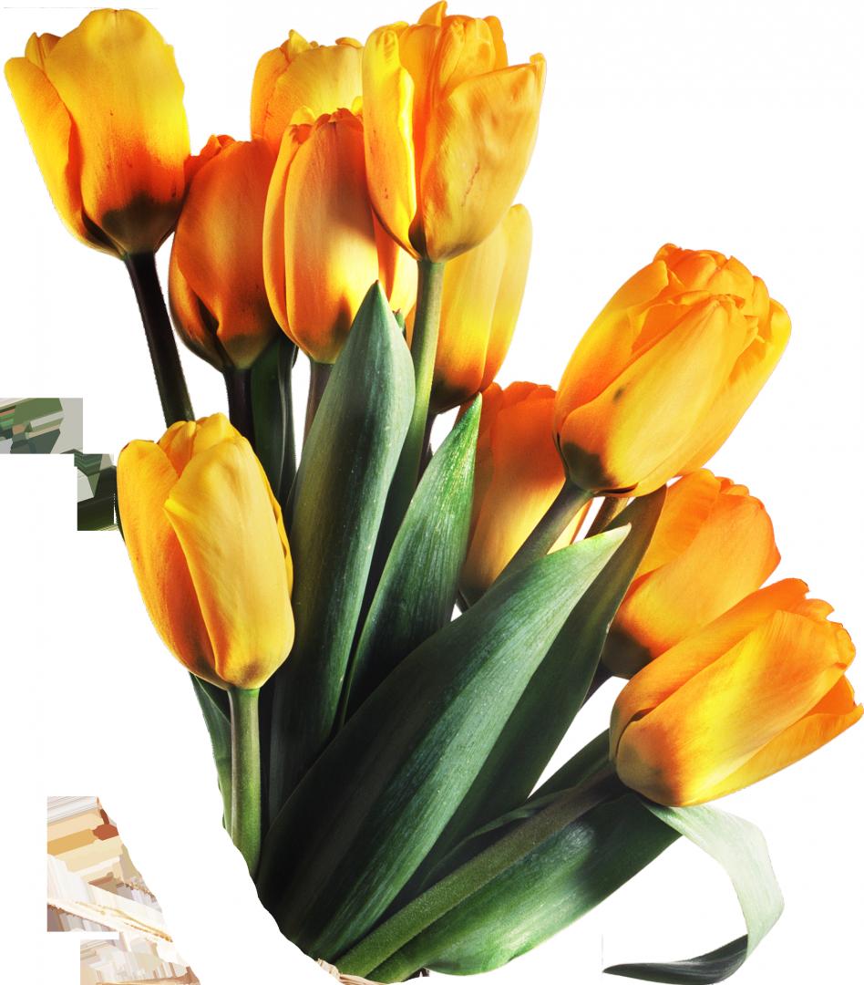 Тюльпаны в пнг на прозрачном фоне