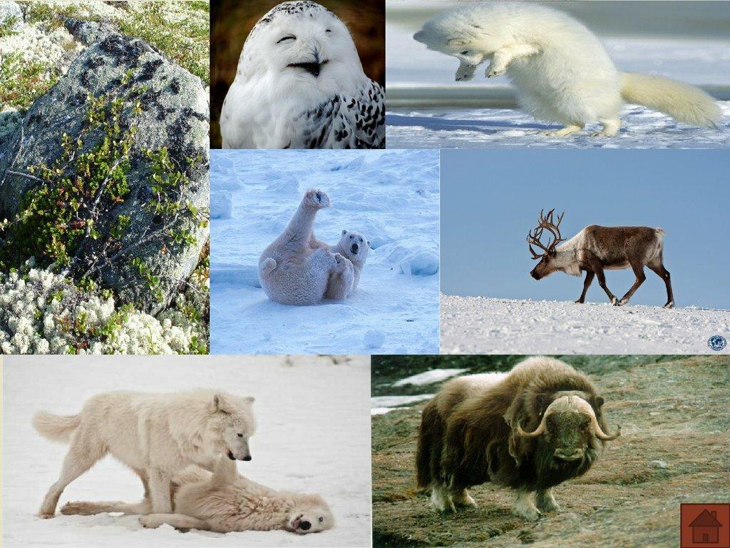 твоя северная америка картинки животный мир спине может