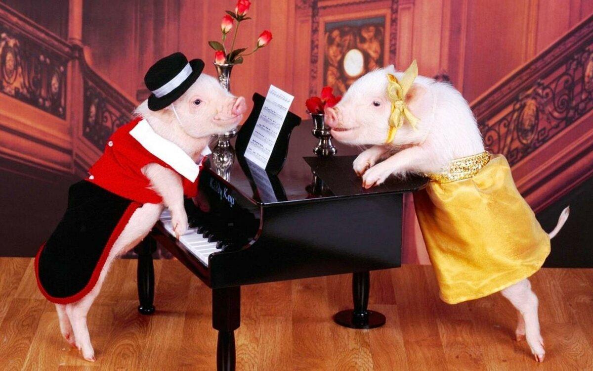 Прикольные картинки со свинкой на новый год