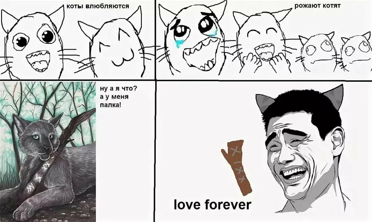 35-летием девушке, смешные картинки коты воители с надписями