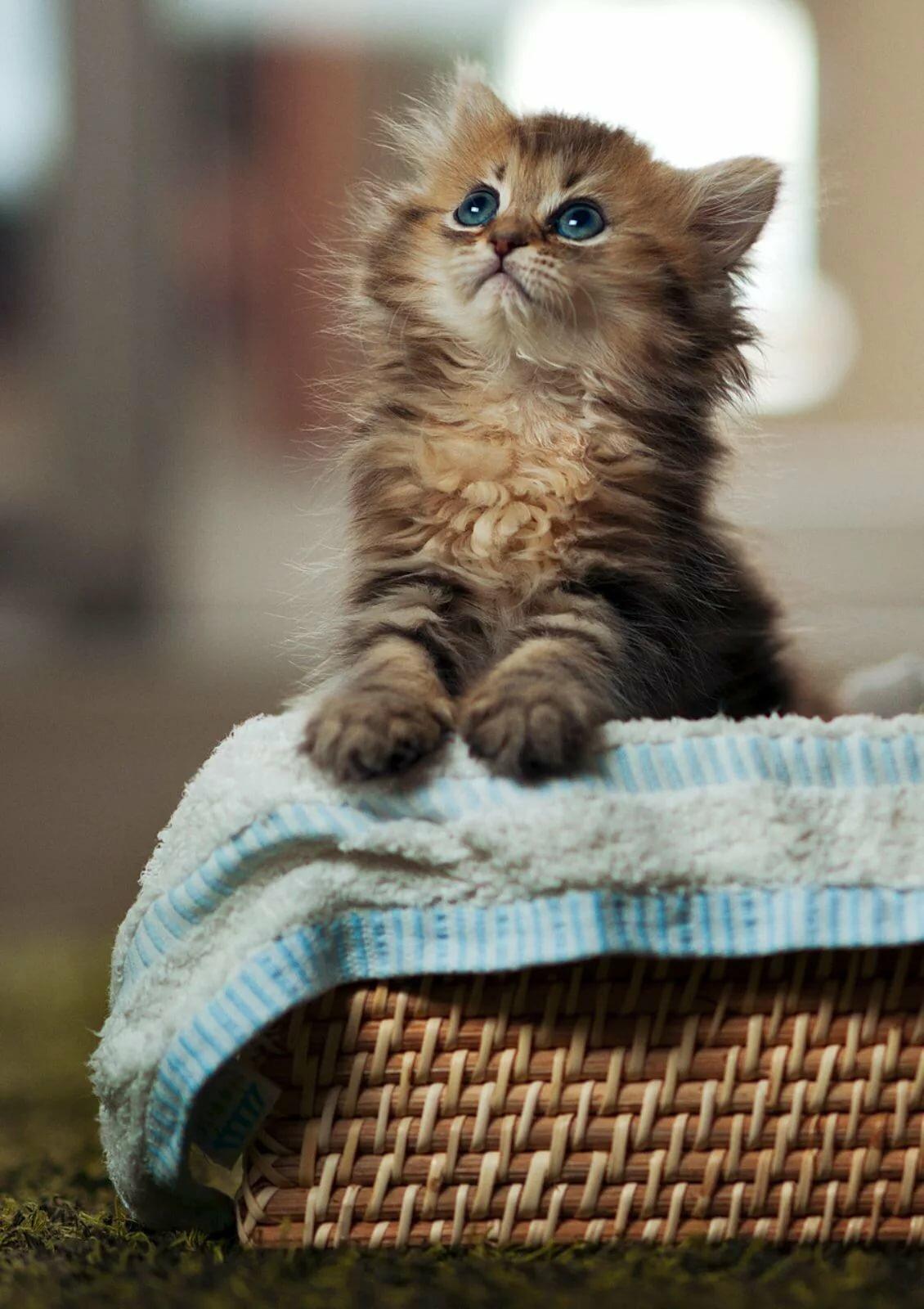 Картинки кошки красивые анимашки, открытки спорт