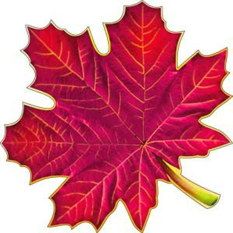 кленовые листья цветные картинки распечатать севере большей частью