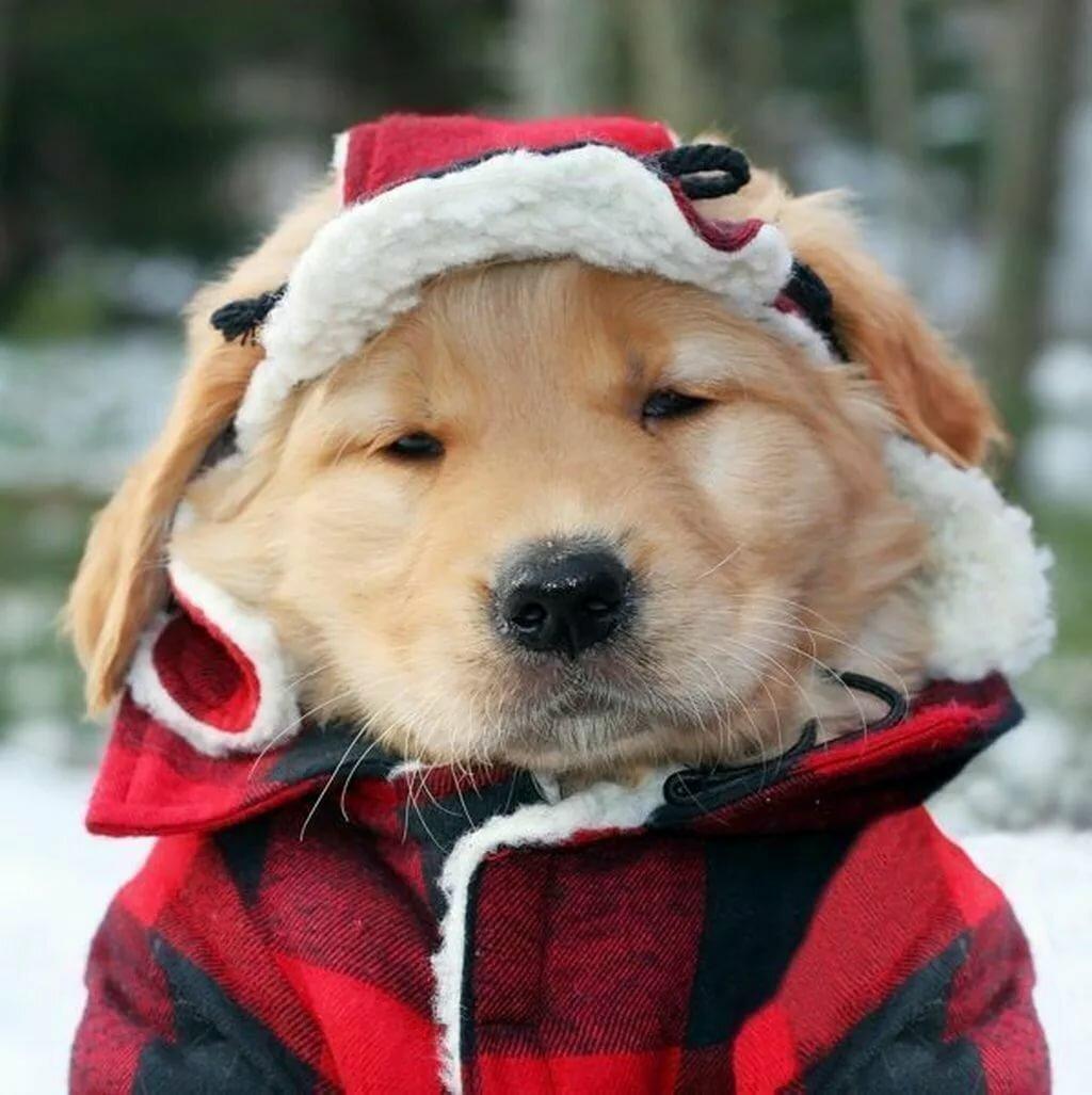 прикольное фото собаки в зимней одежде