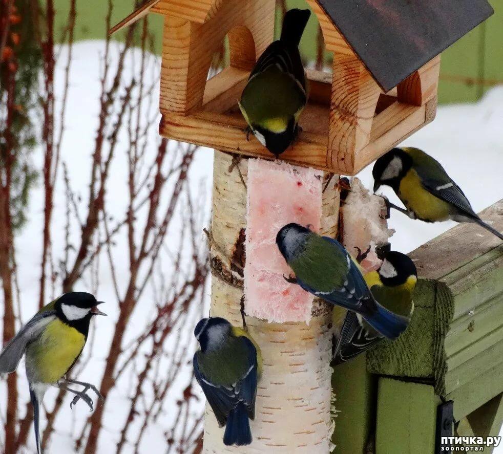 первісно картинки птицы с кормушками чем решите
