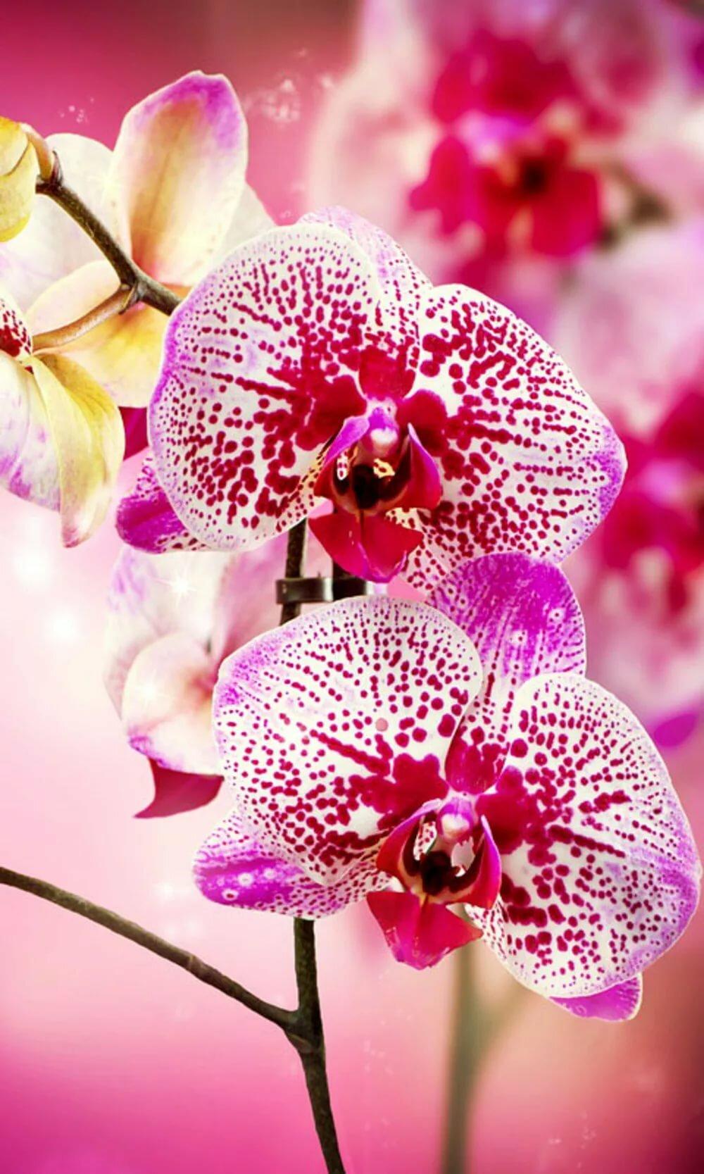Орхидеи фото на телефон ее, откроете