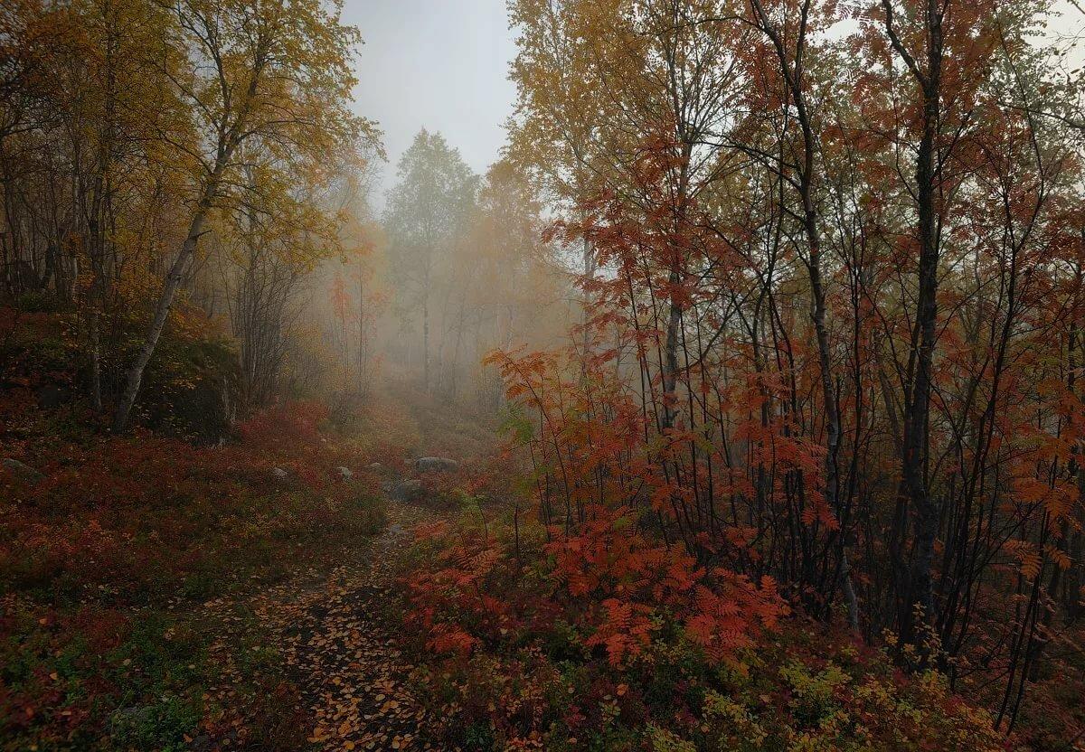 Картинки дождь лес осень