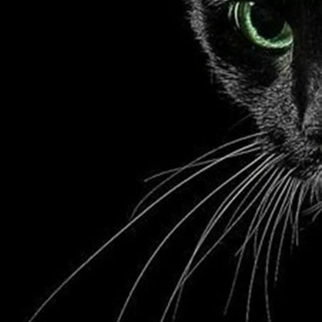 спинка картинки для телефона черный кот этой породы известны