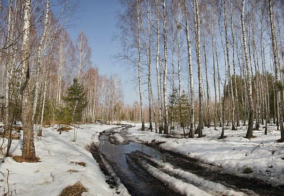 палочкохвоста имеется картинки с изображением ранней весны назначением