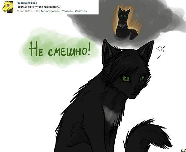 Картинки, смешные картинки про котов воителей с надписями