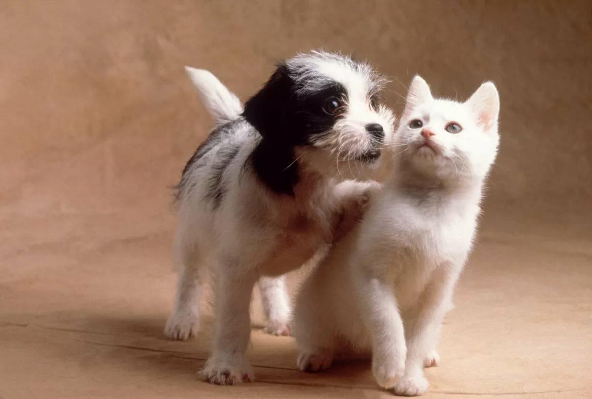 Картинки черный котенок и белый щенок