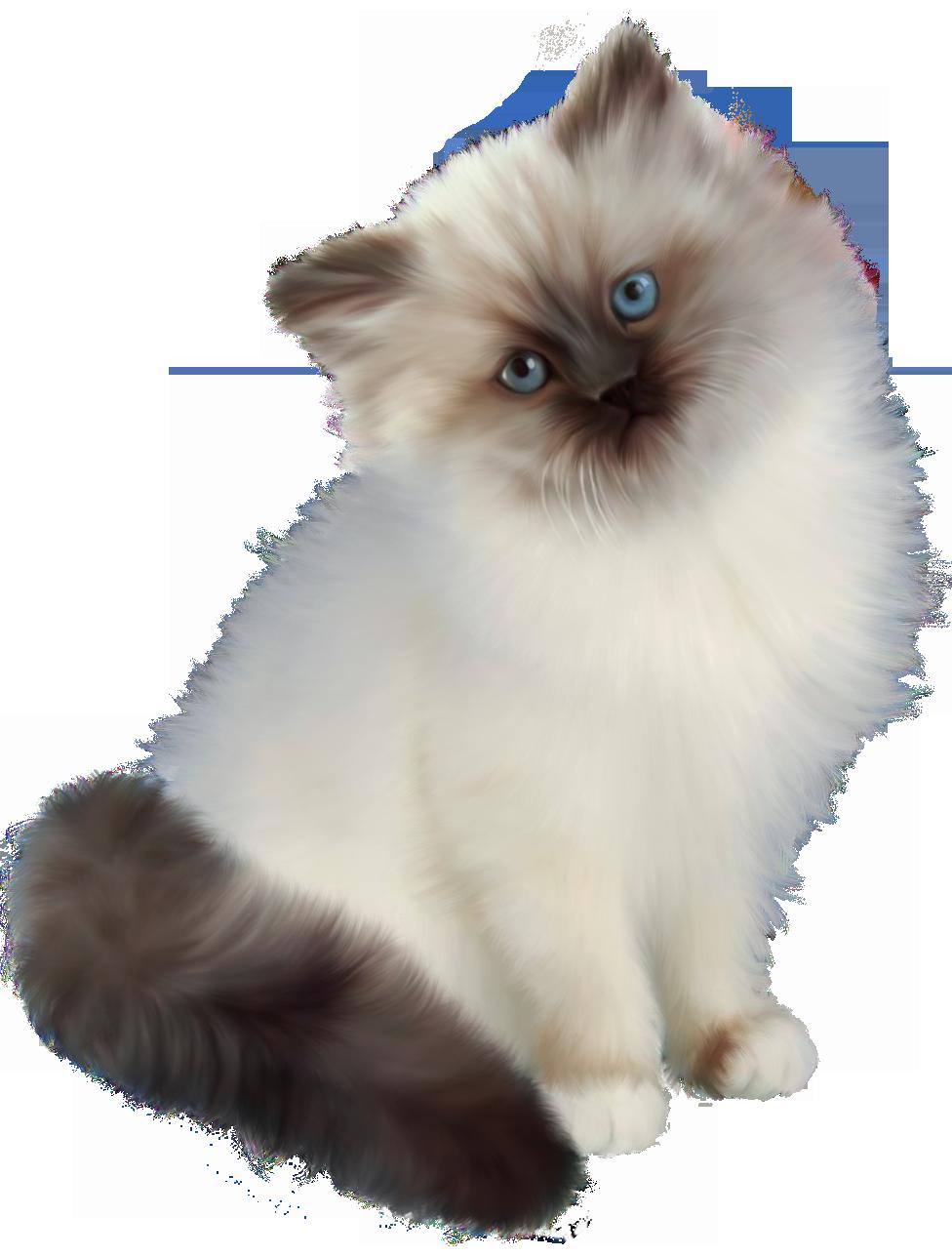 Картинки котов на прозрачном фоне