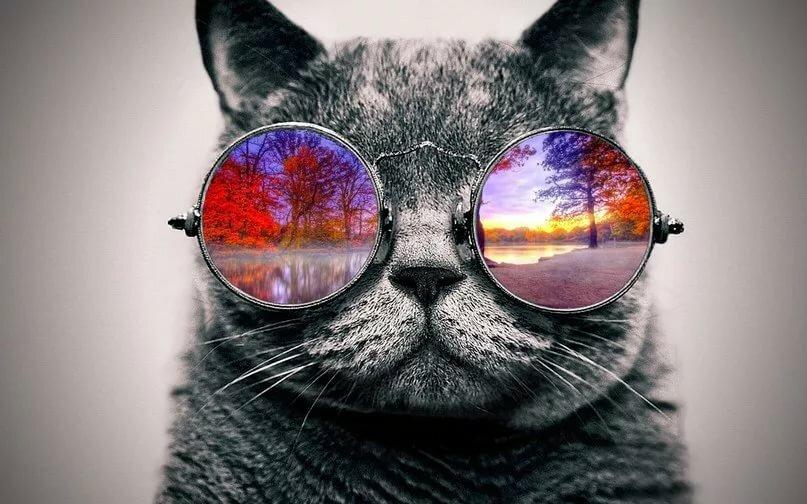 Клевые картинки с очками