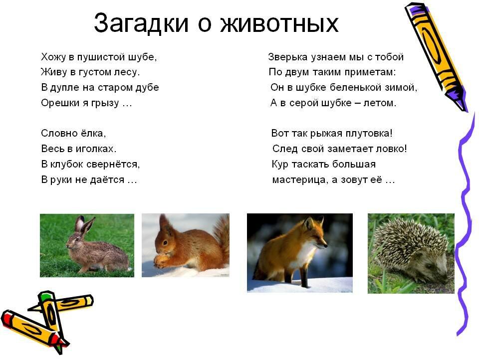 Загадки о животных и птицах с картинками