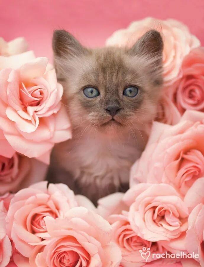 Картинки котята с цветами роз момента