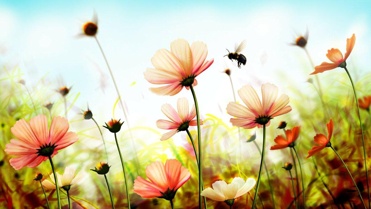Фотообои на рабочий стол лето цветы