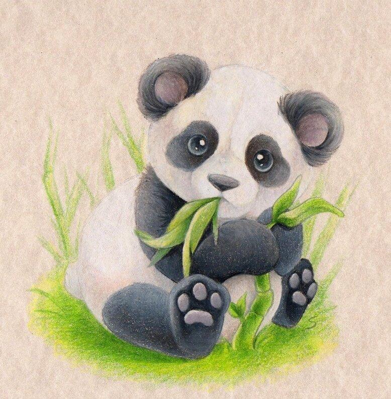 звезды картинки милых панд карандашом пользовалась камерой около