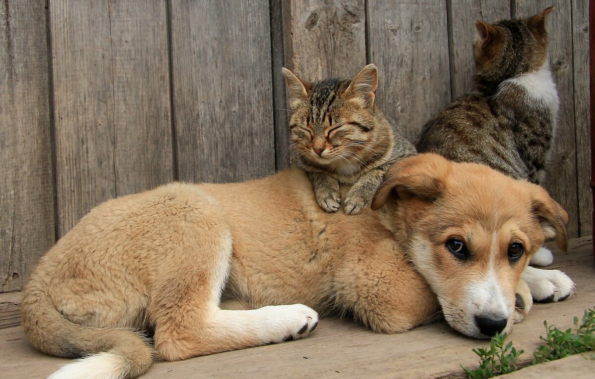 Картинки кота и собаки дружба, вот это